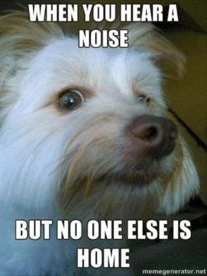 Dog Memes Of The Day 30 Pics – Ep36 #dogs #doglovers #lovelyanimalsworld - Lovely Animals World: WHEN YOU HEAR A  NOISE  BUT NO ONE ELSE IS  HOME  memegenerator.net Dog Memes Of The Day 30 Pics – Ep36 #dogs #doglovers #lovelyanimalsworld - Lovely Animals World