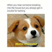 """Cute, Memes, and House: When you hear someone breaking  into the house but you always get in  trouble for barking  Barks internally <p>Too cute via /r/memes <a href=""""http://ift.tt/2vNEgQA"""">http://ift.tt/2vNEgQA</a></p>"""