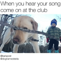 """Memes, 🤖, and Jam: When you hear your song  come on at the club  @barkpost  @dognamedstella """"OH SH% THAT'S MY JAM"""" . what's your song?? literallyleaveyoursonginthecomments . @dognamedstella @barkpost"""