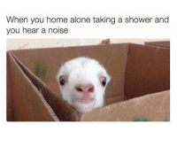 Being Alone, Home Alone, and Memes: When you home alone taking a shower and  you hear a noise Who's home 😂