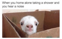 Being Alone, Funny, and Home Alone: When you home alone taking a shower and  you hear a noise Hellloooo !!