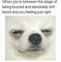 Latinos, Memes, and Shit: When you in between the stage of  being buzzed and absolutely shit  faced and you feeling just right Lmaoo 😂😂😂😂😂😂 🔥 Follow Us 👉 @latinoswithattitude 🔥 latinosbelike latinasbelike latinoproblems mexicansbelike mexican mexicanproblems hispanicsbelike hispanic hispanicproblems latina latinas latino latinos hispanicsbelike