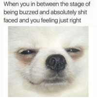 Memes, Shit, and 🤖: When you in between the stage of  being buzzed and absolutely shit  faced and you feeling just right Pretty much