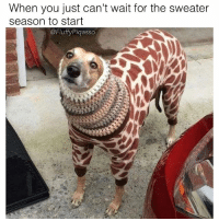 Memes, 🤖, and Will: When you just can't wait for the sweater  season to start  @FluffyPiqasso  is When will the hecking sweater season start 😔 ( @fluffypiqasso )