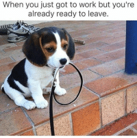 When you just got to work but you're  already ready to leave. Over it already.