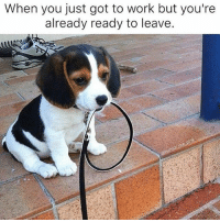 When you just got to work but you're  already ready to leave. Okay I showed up, can I go home now ??? (Rp: @humor_me_pink) work workinggirl fuckwork tequilatuesday