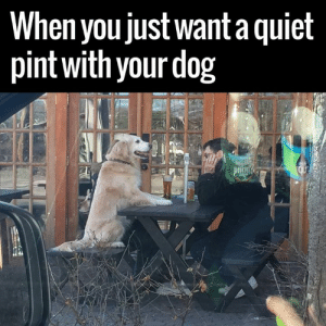 Memes, Pint, and Rough: When you justwant a quiel  pint with your dog It's been a 'Rough' week 😂