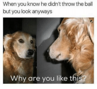 Why Are You Like This, Looking, and Why: When you know he didn't throw the ball  but you look anyways  Why are you like this?