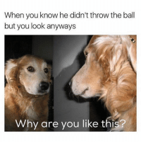 Memes, Why Are You Like This, and 🤖: When you know he didn't throw the ball  but you look anyways  Why are you like this? Me