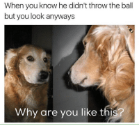 Why Are You Like This, Dank Memes, and Looking: When you know he didn't throw the ball  but you look anyways  Why are you like this? Why @champagneemojis