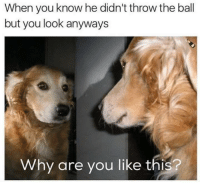 Memes, Why Are You Like This, and 🤖: When you know he didn't throw the ball  but you look anyways  Why are you like this?