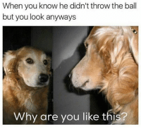 Dank, Why Are You Like This, and 🤖: When you know he didn't throw the ball  but you look anyways  Why are you like this? Every time.