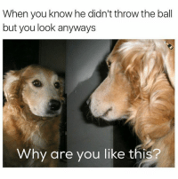 Memes, Why Are You Like This, and 🤖: When you know he didn't throw the ball  but you look anyways  Why are you like this? cmon you're better than this ( @champagneemojis )