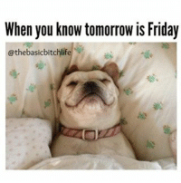Memes, 🤖, and The Dog: When you know tomorrow is Friday  @thebasicbitchlif NO IM NOT DONE WITH THE DOG POSTS TODAY PEOPLE 💕💝🐶😘 thebasicbitchlife