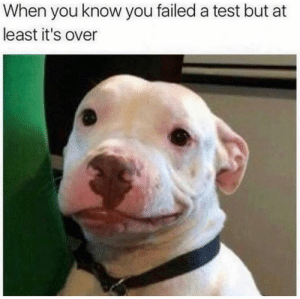 Dog Memes Of The Day 32 Pics – Ep38 #dogs #dogmemes #lovelyanimalsworld - Lovely Animals World: When you know you failed a test but at  least it's over Dog Memes Of The Day 32 Pics – Ep38 #dogs #dogmemes #lovelyanimalsworld - Lovely Animals World