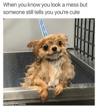 Cute, Memes, and Happy: When you know you look a mess but  someone still tells you you're cute  ownage Pranks Happy Saturday