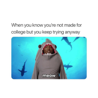 College, You, and Made: When you know you're not made for  college but you keep trying anyway  meoW