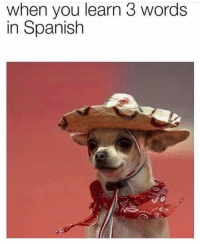 Spanish, Words, and You: when you learn 3 words  in Spanish Ayy chico