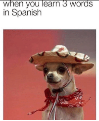 Spanish, How, and Words: when you learn 3 words  in Spanish How everybody else be