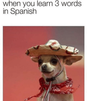 Is the spanish memes dead yet?: when you learn 3 words  in Spanish Is the spanish memes dead yet?