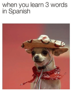 Spanish, Tequila, and Words: when you learn 3 words  in Spanish Taco, tequila, sombrero