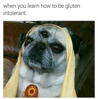 "<p><a href=""http://memehumor.net/post/165963591198/namaste"" class=""tumblr_blog"">memehumor</a>:</p>  <blockquote><p>Namaste</p></blockquote>: When you learn how to be giuten  intolerant <p><a href=""http://memehumor.net/post/165963591198/namaste"" class=""tumblr_blog"">memehumor</a>:</p>  <blockquote><p>Namaste</p></blockquote>"