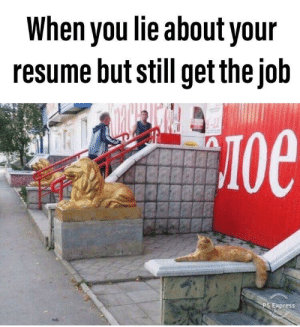Lie About: When you lie about your  resume but still get the job  -22  Oe  PS Express