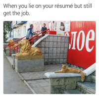 😂 | for more 👉 @lei.ying.lo: When you lie on your résumé but still  get the job 😂 | for more 👉 @lei.ying.lo