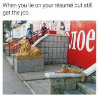 25 best when you lie on your resume memes you lying memes you