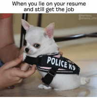 Hehehehe literallythatsyou @cheeky_chis: When you lie on your resume  and still get the job  @bark box  @cheeky chls  POLICE AS Hehehehe literallythatsyou @cheeky_chis