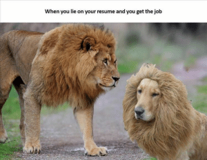 These animals are so confused as to how they got this job...and now they have to deal with it. Good luck!#animals #animalmemes #funnyanimals #animalsjob #animalresume #cuteanimals: When you lie on your resume and you get the job These animals are so confused as to how they got this job...and now they have to deal with it. Good luck!#animals #animalmemes #funnyanimals #animalsjob #animalresume #cuteanimals