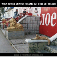 Memes, Resume, and 🤖: WHEN YOU LIE ON YOUR RESUME BUT STILL GET THE J0B  SHARED ON l'M NOT RIGHT IN THE HEAD.COM Submitted by Jon Loony Halligan