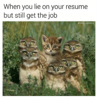 fake it till you make it follow @sean_speezy his resume is legit!: When you lie on your resume  but still get the job  Osean speezy fake it till you make it follow @sean_speezy his resume is legit!