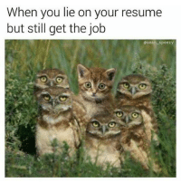 When You Lie On Your Resume: When you lie on your resume  but still get the job  @sean speezy