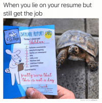 Dog or nah?: When you lie on your resume but  still get the job  DAYCARE REPORT CARD  ty DogToday I observed  Ci  Sheldon  上follows commands  playfu/outgoing  sits  Ebarks on command  e0  rolls over  Efetches ball  E-catches frisbee  E good boy  Comments:  3  butty svu that  this is not a dog  m Trish  3/29  MADE WITH MOMUS Dog or nah?