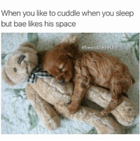 It's going to be a long night 😂 cuddle bae sleep sleeping funnyaf funny memes meme jokes laughs follow followme puppy puppies space puppiesofinstagram dog dogs memes meme: When you like to cuddle when you sleep  but bae likes his space  @been theretho It's going to be a long night 😂 cuddle bae sleep sleeping funnyaf funny memes meme jokes laughs follow followme puppy puppies space puppiesofinstagram dog dogs memes meme