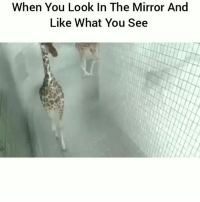 Funny, Lol, and Mirror: When You Look In The Mirror And  Like What You See Tag a cocky person lol