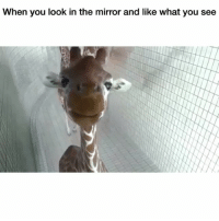 Funny, Mirror, and Looking: When you look in the mirror and like what you see 😂😂