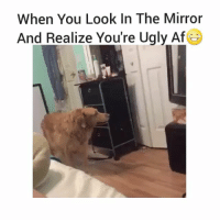 Funny, Ugly, and Mirror: When You Look In The Mirror  And Realize You're Ugly Af So me 😔😂😂 hoodclips hoodcomedy