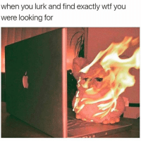 Memes, Wtf, and 🤖: when you lurk and find exactly wtf you  were looking for 😂Tag someone