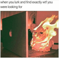 Memes, Wtf, and 🤖: when you lurk and find exactly wtf you  were looking for Kmn 😒 goodgirlwithbadthoughts 💅🏼