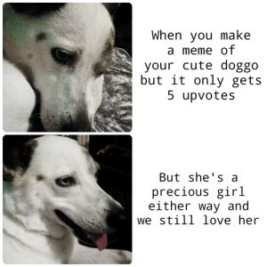 hope you have a good day guys: When you make  a meme of  your cute doggo  but it only gets  5 upvotes  But she's a  precious girl  either way and  we still love her hope you have a good day guys