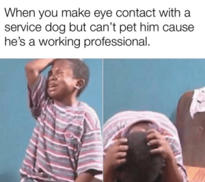 30-minute-memes:He's a good boy though.: When you make eye contact with a  service dog but can't pet him cause  he's a working professional. 30-minute-memes:He's a good boy though.