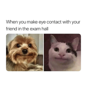 Eye, Friend, and Make: When you make eye contact with your  friend in the exam hall 😂