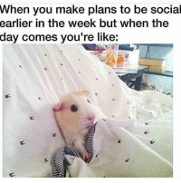 Funny, Day, and Make: When you make plans to be social  earlier  in the week but when the  day comes you're like: 👀