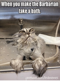 He looks so Dwarven.  #dndcaturday  -Law: When you make the Barbarian  take a bath  acebook.com/andmemes He looks so Dwarven.  #dndcaturday  -Law