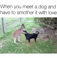 Memes, 🤖, and Kangaroo: When you meet a dog and  have to smother it with love  dogsbeingbasic PSA: Not all kangaroos are mean to dogs! @_theblessedone