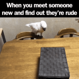 Rude, They, and New: When you meet someone  new and find out they're rude When you meet someone new, and find out theyre rude!