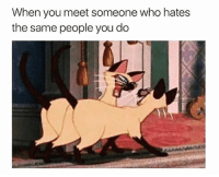 Humans of Tumblr, Who, and You: When you meet someone who hates  the same people you do