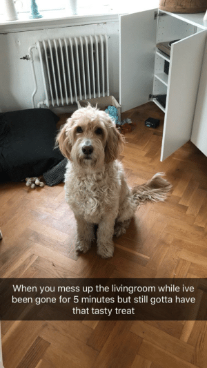 Irl, Dog IRL, and Been: When you mess up the livingroom while ive  been gone for 5 minutes but still gotta have  that tasty treat woof_irl